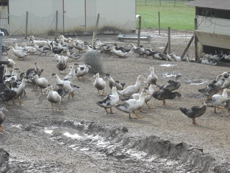 Découverte des métiers liés aux animaux pour les 3°
