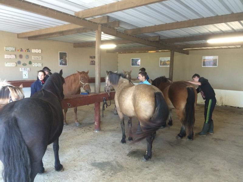 Premières séances d'équitation pour les 3°