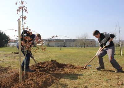 2016-03-15-2nde-plantation-arbres-racines-nue-11