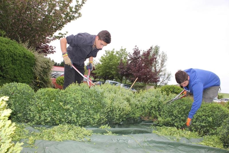 Entretien des espaces verts du lycée