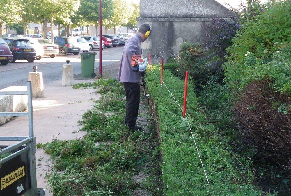 Taille et désherbage d'arbustes pour les 1°AP