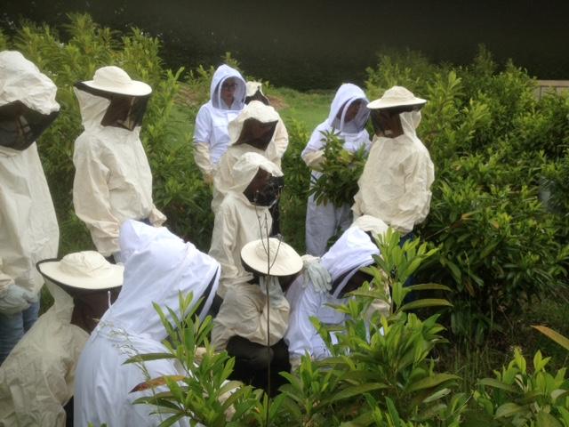 La vie des abeilles en 4°