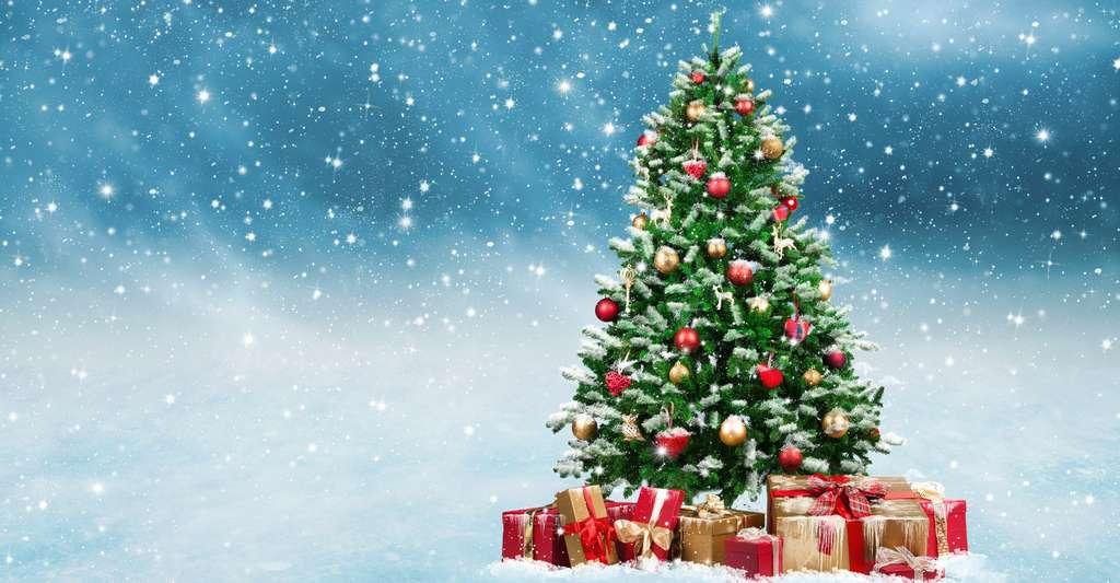Des sapins pour Noël