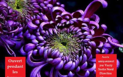 Vente de Chrysanthèmes